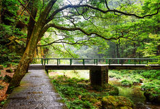 Scenic view of stone walkway and bridge over river among woods Stock Photos