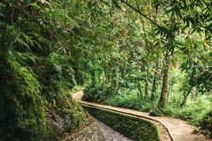 Scenic view of stream in green forest in ubud,. Bali, indonesia stock photography