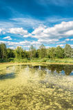 Scenic View Of Summer Sunny Forest Woods And Wild Bog. Nature. Royalty Free Stock Photography