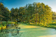 Scenic View Of Summer Sunny Forest Woods And Wild Bog. Nature. Royalty Free Stock Photos