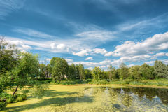 Scenic View Of Summer Sunny Forest Woods And Wild Bog. Nature. N Royalty Free Stock Photo
