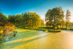 Scenic View Of Summer Sunny Forest Woods And Wild Bog. Nature. N. Landscape Of Summer Sunny Forest Woods And Wild Bog With Duckweed On Water Surface. Nature Royalty Free Stock Image