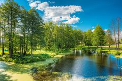 Scenic view of summer sunny forest woods and wild bog. Nature. Nobody. Scenic View Of Summer Sunny Forest Woods And Wild Bog With Duckweed On Water Surface Royalty Free Stock Image