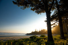 Scenic view with sun glow. Sandy beach with trees surrounded by the glow of the sun Stock Photography