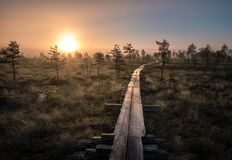 Scenic view from swamp with wooden path at autumn morning Stock Image