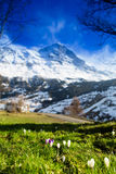 Scenic view of Swiss Alps Stock Photography