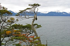 Scenic view in Tierra del Fuego, Patagonia Stock Images