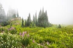 Scenic view in Tipsoo lake in Mount Rainier area,WA,USA Stock Images