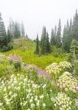 Scenic view in Tipsoo lake in Mount Rainier area,WA,USA Royalty Free Stock Photography