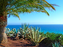 Scenic view to the ocean with palms Royalty Free Stock Photo