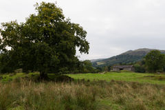 Scenic view of Tree and House in Ambleside countryside, Cumbria. UK Stock Photo