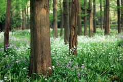 Scenic view of tree trunks with wild flowers Royalty Free Stock Photos