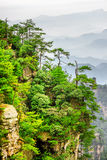Scenic view of trees growing on top of rock, Avatar Mountains. Scenic view of green trees growing on top of rock in the Tianzi Mountains Avatar Rocks, the royalty free stock images