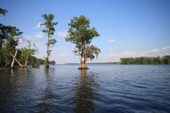 Scenic view of trees in swamp. With blue sky background, Albemarle Sound, North Carolina, U.S.A Royalty Free Stock Photography