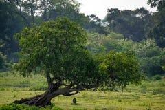 Landscape of Yala National Park, Sri Lanka Stock Photos