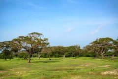 Landscape of Yala National Park, Sri Lanka Stock Photo