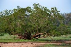 Landscape of Yala National Park, Sri Lanka Stock Image
