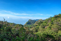 Scenic view of tropical mountain forest Stock Photos