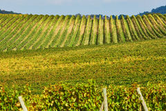 Scenic view of Tuscan vineyards Royalty Free Stock Images