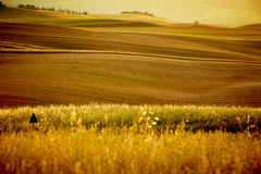 Scenic view of Tuscany landscape Royalty Free Stock Images