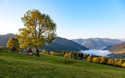 A morning mist between mountains stock images