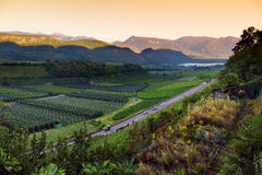 Scenic view of vineyards and apple orchards near Kaltern town at the South Tyrolean wine route. At autumn day Royalty Free Stock Photography