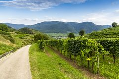 Scenic View into the Wachau with the river Danube. Spitz. Austria stock photo