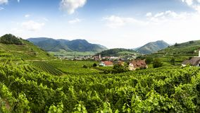 Scenic View into the Wachau with the river Danube. Spitz. Austria royalty free stock images
