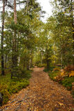 Scenic view of walkway along lush forest Royalty Free Stock Photos