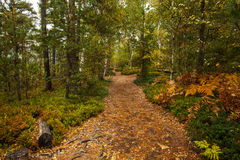 Scenic view of walkway along lush forest Royalty Free Stock Photography