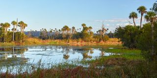 Scenic View of a Wetlands Environment Near Orlando, Florida stock photography