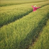Scenic View of Wheat Field Stock Images