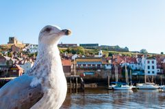 Scenic view of Whitby city and abbey in sunny autumn day Stock Photos