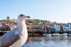 Scenic view of Whitby city and abbey in sunny autumn day.Whitby is a seaside town and port in North Yorkshire, UK. Its attraction Stock Photos