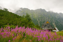 Scenic view of wild pink flowers, wooden huts and mountain range at background Stock Image