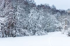 Scenic view of winter forest and trees covered. With snow royalty free stock photo