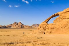 Scenic view of the yellow colored arch rock in the Wadi rum desert in Jordan with man and camel walking through. At daytime royalty free stock photo