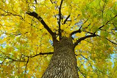 Scenic view of yellow fall leaves and branches Royalty Free Stock Photos