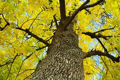 Scenic view of yellow fall leaves and branches Royalty Free Stock Image
