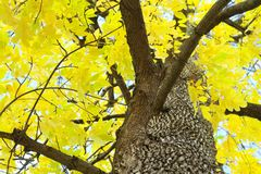 Scenic view of yellow fall leaves and branches Stock Images