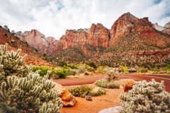 Scenic View at Zion National Park. Mountain range at Zion National Park, Utah, USA -View from Mount Camel Highway before Springville with cactuses in the Stock Photography