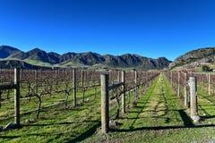 Scenic vineyard in Canterbury Stock Photo