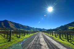 Scenic vineyard in Canterbury Stock Images