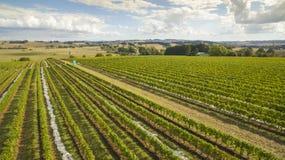 Scenic vineyard and farmland, Australia. Beautiful vineyard covered and surrounding farmland in South Gippsland, Australia Stock Photo