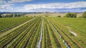 Scenic vineyard and farmland, Australia. Beautiful vineyard covered and surrounding farmland in South Gippsland, Australia Royalty Free Stock Images