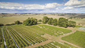 Scenic vineyard and farmland, Australia. Beautiful vineyard covered and surrounding farmland in South Gippsland, Australia Royalty Free Stock Photo