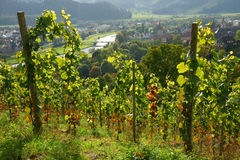 Scenic vineyard on hill. Scenic view of vineyard on hill with rural village or town in background, Germany Royalty Free Stock Photos