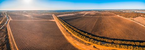 Scenic vineyard in Kingston on Murray, Riverland. Stock Photos