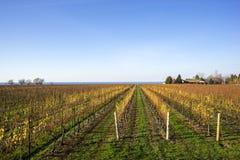 Scenic Vineyard by Lake Ontario #2. Scenic Vineyard by Lake Ontario in Late Fall #2 Royalty Free Stock Photo