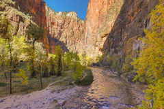 Scenic Virgin River in Zion N.P. in Fall Royalty Free Stock Photo